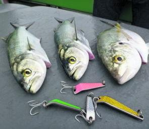 Botany Bay tailor and trevally seem fond of the Bumpa-Bar lures.