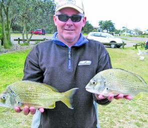 Bream have been in good numbers. These took floating prawns cast around structure in the Hunter River.