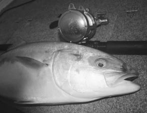 March is perhaps the last reliable month for targeting warm water species such as kingfish.