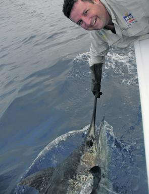 Marlin have been hit and miss of late. Patience, hard work, and a hint of luck are the key to catching fish like this.