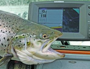 Your sounder/gps is crucial for finding the depth fish are at as well as monitoring your speed and position when trolling.