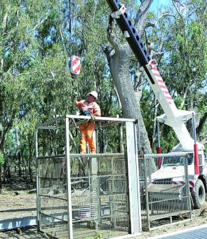 The Island Creek cage is part of extensive carp control works in the Lachlan catchment, including the targeting of carp breeding hot spots such as Lake Brewster and the Great Cumbumg Swamp