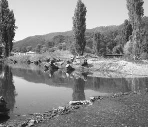 Selective removal of willow trees has been undertaken along the banks of Snowy Creek, near its junction with the Mitta.