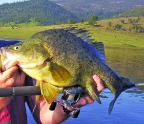 Big golden perch will be the target for lure and bait anglers around many of the dams.