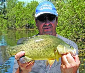 Golden perch will be patrolling any flooded areas, casting lures will be the way to find them.