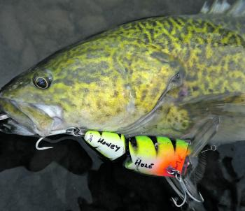 Surface lures will continue to produce through the cooler months. Persistence is the key.