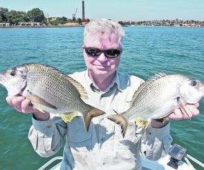 Dennis with a couple of quality bream that were caught near the entrance to the Lane Cove River.