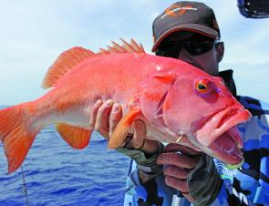 Coral trout can't resist Gulp…simply drop it to the bottom and hang on.