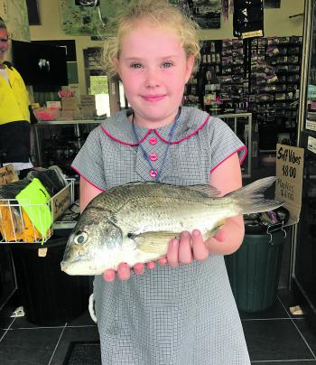 Many anglers are having success on the bream recently and this little fisher is proving it!