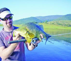 Golden perch will take both lures and baits this month. Try fishing the mornings and afternoons when it is cooler.