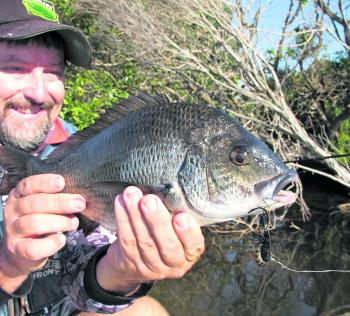 Big snag dwelling bream are back on the river edges and taking sinking hardbody lures.