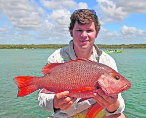 Chris Lacey caught this thumper 55cm mangrove jack down at the river mouth.