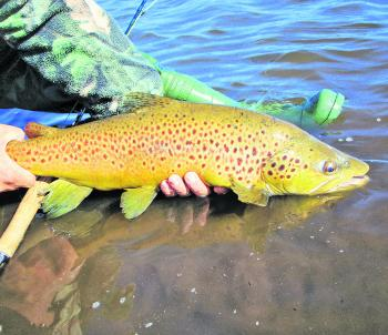 Flyfishing comes into its own this month and will be the gun technique to employ if you want to land trophy-sized trout like this.