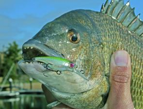 Local bream fishing has been hard but will improve if we get some much-needed rain.