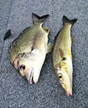 Bream and whiting should remain quite active this month, although they may not be so keen to hit the surface lures.