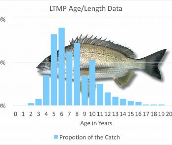Age-length curve for Queensland yellowfin bream.