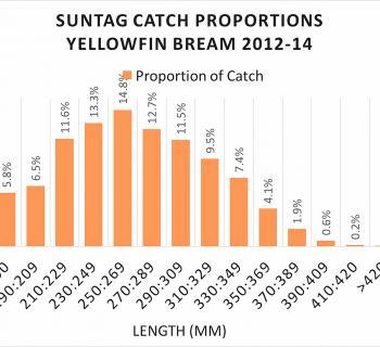 Length proportion of the catch for Suntag in 2012-2014 for Queensland yellowfin bream.