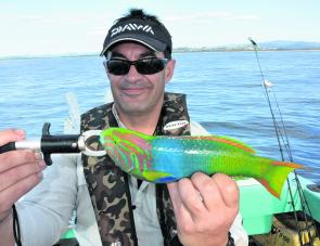 Pete with a brightly coloured wrasse. Such a pretty looking fish could almost be a lure!