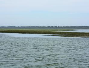 These exposed mudflats covered in weed give a good idea of where the fish will be as the tide fills - prime territory!