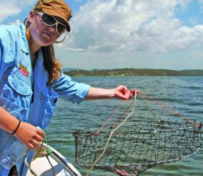 A dilly pot or hoop or lift net has to be checked regularly because crabs can come and go. A mullet bait is wired in at the centre.
