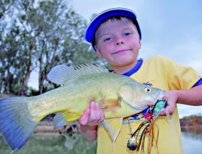 Golden perch are a reliable catch along the Murray as the water temperatures continue to warm.