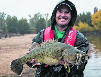 This big cod was taken on a delightfully rainy day on a spinnerbait.