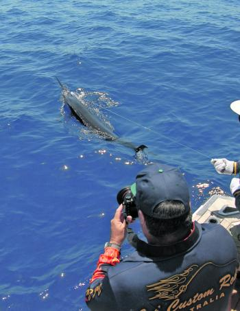 The wide grounds are a good option this month for anglers who want to chase a blue marlin.