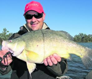 The author proudly displaying a fat yellowbelly caught recently around Mildura on a Bassman spinnerbait