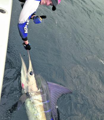 There will be a few striped marlin about this month and they are generally big ones.