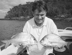 Big Port Stephens bream are aggressive and will attack surface lures and soft plastics as well as bait.