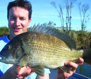 A big stud bream about to be returned. These slow-growing fish take many years to replace, so anglers should think hard about whether they really need to kill them.