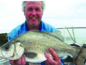Bryan Walsh about to return a thumping 56cm estuary perch.