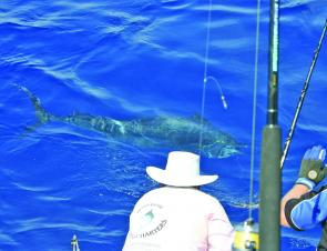 Jari Sansohlm and Rob Wood tag a heavy tackle marlin.