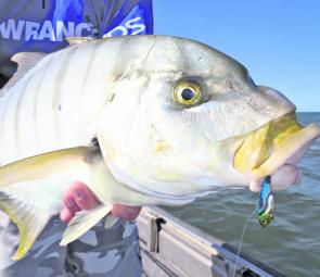 Golden trevally are a fun fish to target when they're feeding in the shallows.