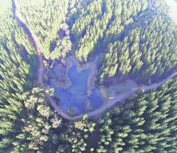An aerial photo of Parkys Dam in the Stanley pine plantation shows how well hidden, and how pretty this little lake is. Although the fishing is poor, it is a great family destination. My wife and kids are actually in this photo, playing with our dog.