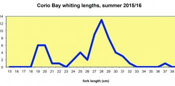 Angler catch data show the entry of two year-old whiting (25-31cm) to the fishery in Corio Bay, followed by one year olds (19-22cm).