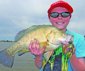 This golden perch took a 1/4oz Bassman spinnerbait at Kangaroo Lake.
