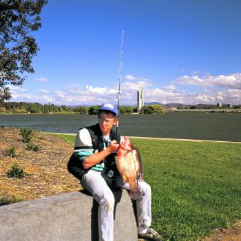 Golden perch have been going gangbusters in Canberra's urban lakes. This prime specimen was caught in the central basin of Lake Burley Griffin, right in front of the Carillon Tower and Parliament House.