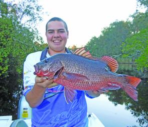 A very big jack caught and released in the upper reaches of the Noosa River by Douglas Wells.