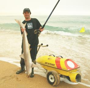 A nice school shark caught fishing with the Surf Baitrunner.