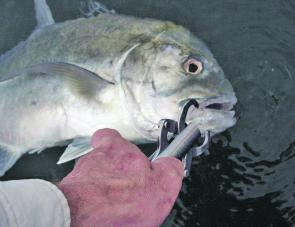 A healthy 2kg trevally caught and released after a happy snap.