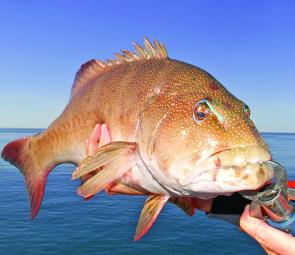 All types of reef fish will be biting in October, as well as coral trout around the shallow and deep reef structures.
