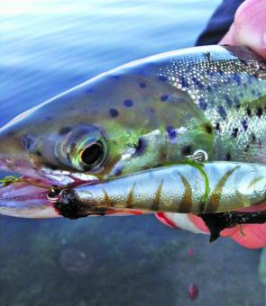 Trout are already being caught and catches should improve over the coming month.
