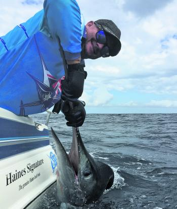 Andy Clark with a nice striped marlin from this season's run.
