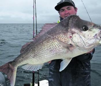 Low light periods and overcast choppy conditions are excellent when targeting big snapper in the shallows.