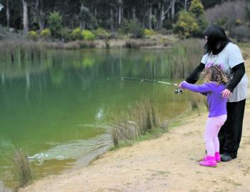 Towards the end of June Victorian Fisheries will stock the family friendly fisheries with yearling rainbow trout in time for the school holidays. This is Holly Alexander reeling in a trout in Stanley Ditch Dam last winter.