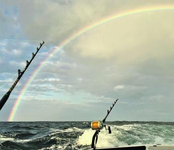 Marlin at the end of the rainbow? Not this year!