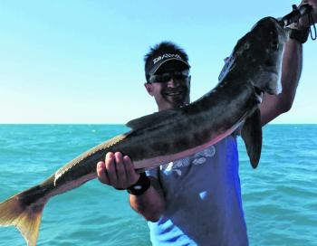 Pete Kyvetos with a massive cobia caught offshore during a delightful weather window.