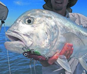 Trevally are real suckers for a big blade. You can work them relatively quickly or jiggle and jump them around a school for scorching runs and addictive action.