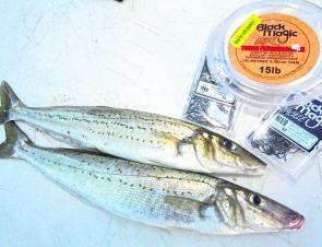 There are plenty of whiting around for those who want to take a break from the snapper.